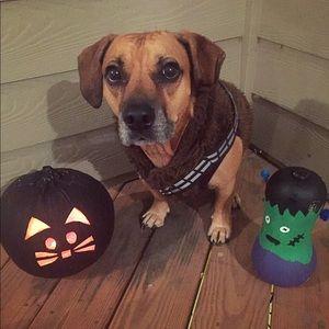 Dog Chewbacca costume. One piece w/ Velcro